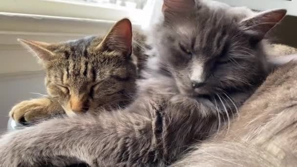 Two adorable sleepy cats cuddle together on a chair by the window.