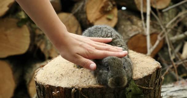 Chlapec hladí roztomilý králíček