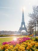 Eiffel Tower with flowers in the foreground in Paris