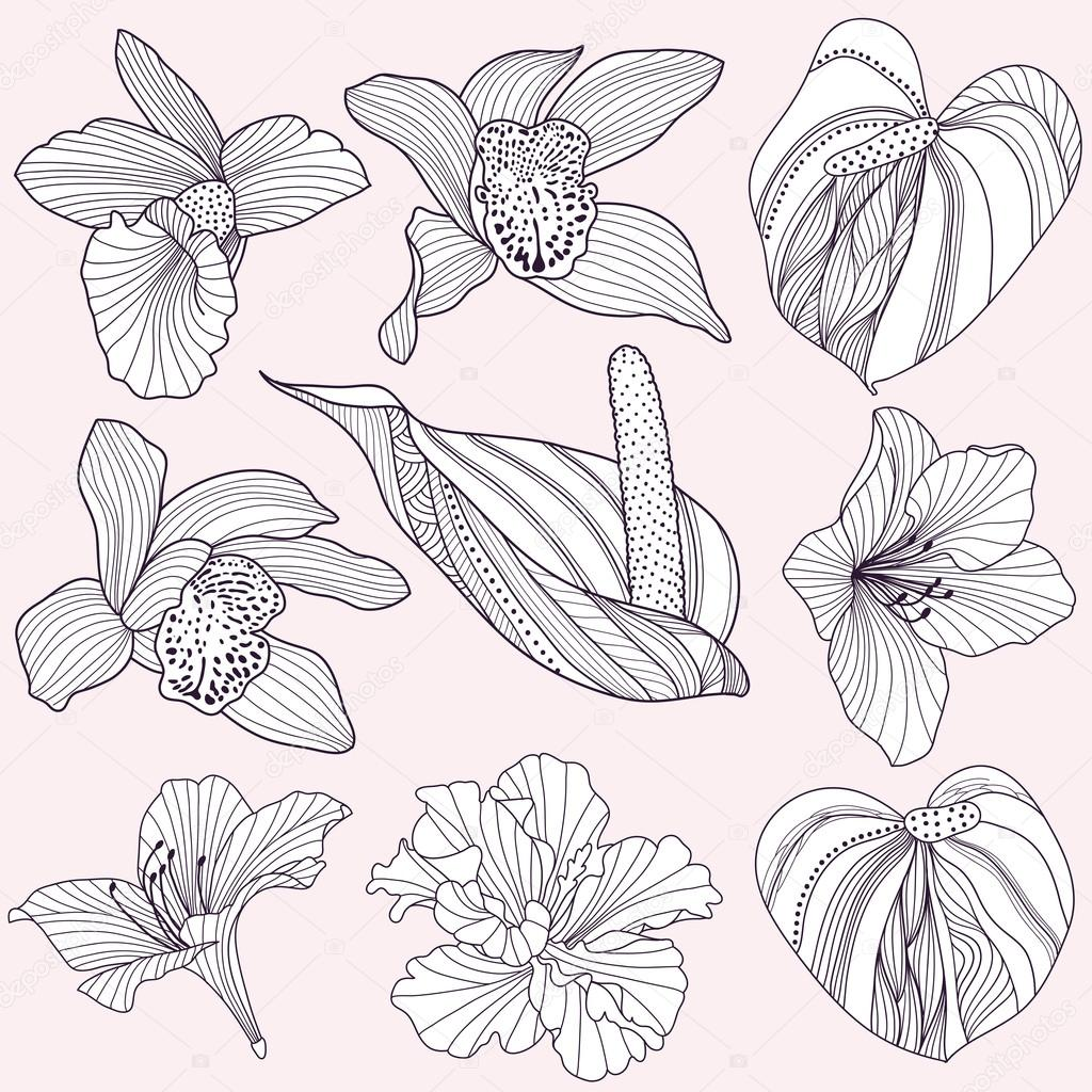 Set of vector tropical flowers
