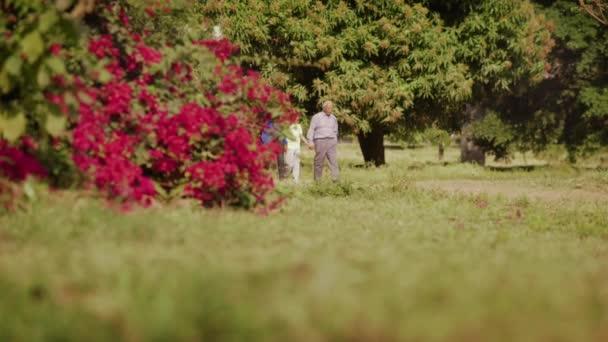 Dědeček a babička v parku s klukem