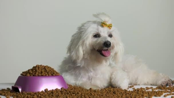 2 kleine Pudel Hund Haustier mit Schüssel mit Essen