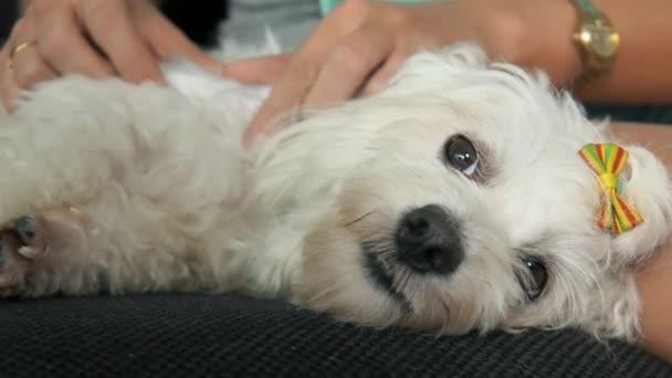 Žena, kontrola srsti psa