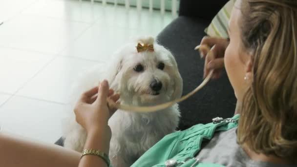 Woman applying Flea Collar To dog