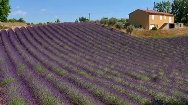 Francia vidéki ház közelében Provence Franciaország déli levendula mező