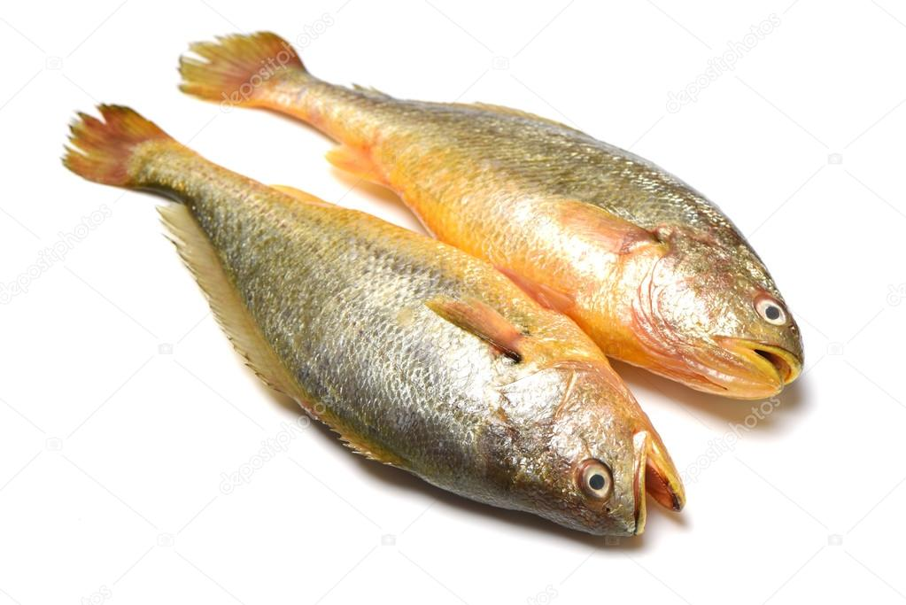 Yellow croaker fish stock photo jianghongyan 67465841 for What is a croaker fish