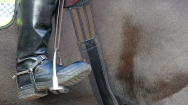 Look of the horse in reins and belts