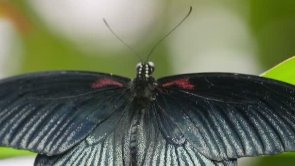 pillangó van egy zöld levél