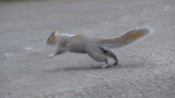 mókus futó út