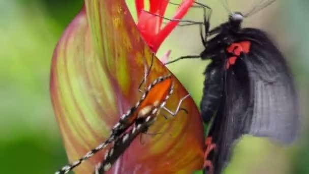 Dvěma motýly bojuje o nektar