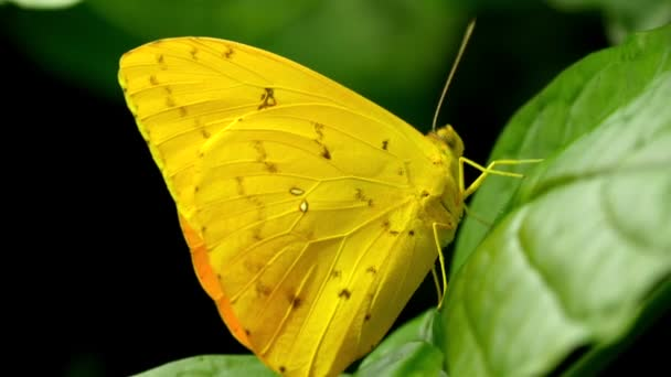 yellow small butterfly on leaf