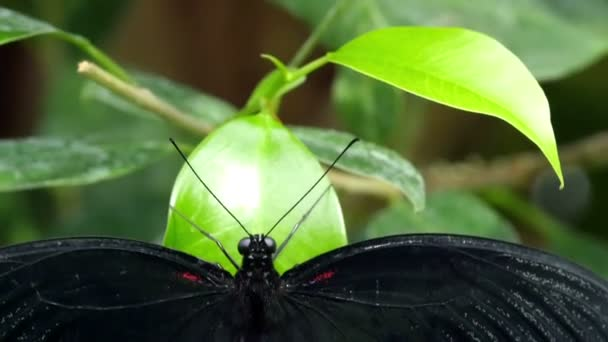 Butterfly with wings wide open