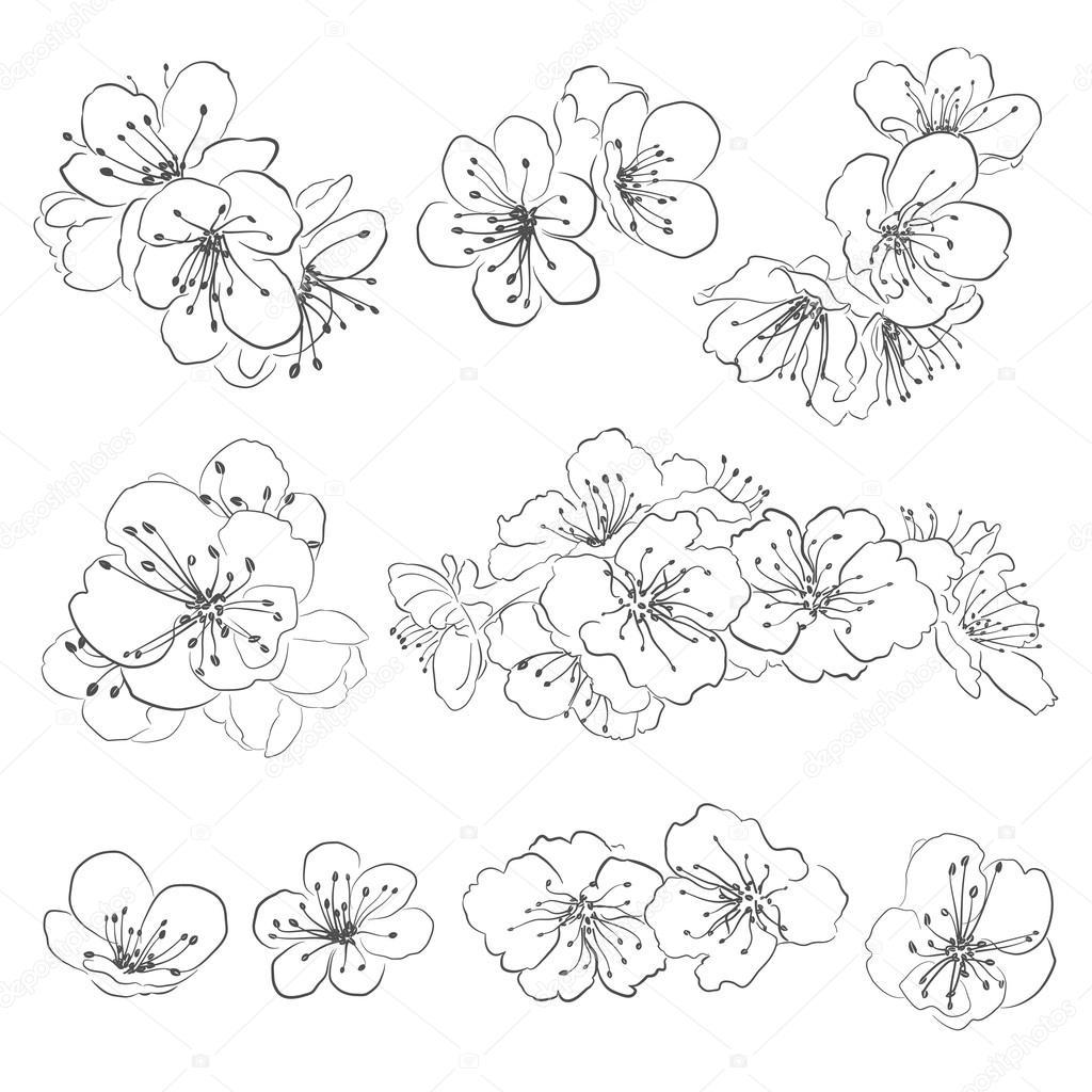 Line Art Design Tutorial : Set di disegno fiori ciliegio — vettoriali stock