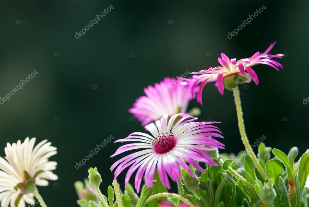 Cerca de unas flores margaritas en Prado de la flor — Fotos de Stock ...