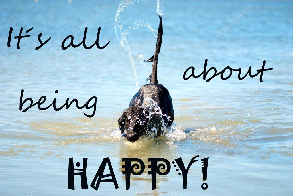 Quotes About Sea Turtles Black Dog Playing In The Ocean Quote Being Happy Stock Photo C Nelosa 75962063