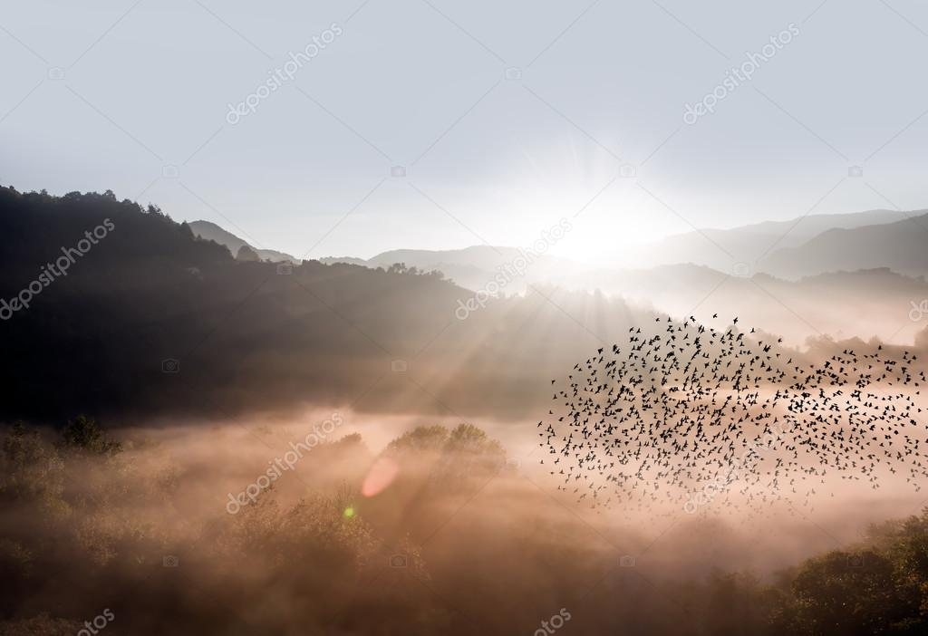 morning misty coniferous forest on hills in fog with flock of birds