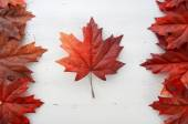 Fotografie Happy Canada Day red silk leaves in shape of Canadian Flag.