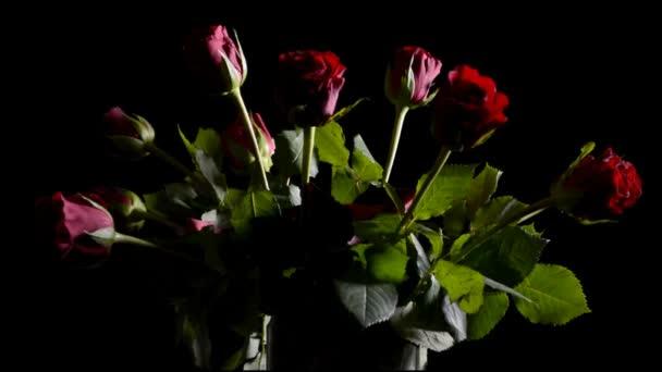 Rote Rosen in der Vase, heranzoomen, vor schwarzem Hintergrund beleuchten.