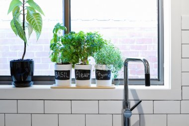 Pots of herbs on contemporary kitchen window sill