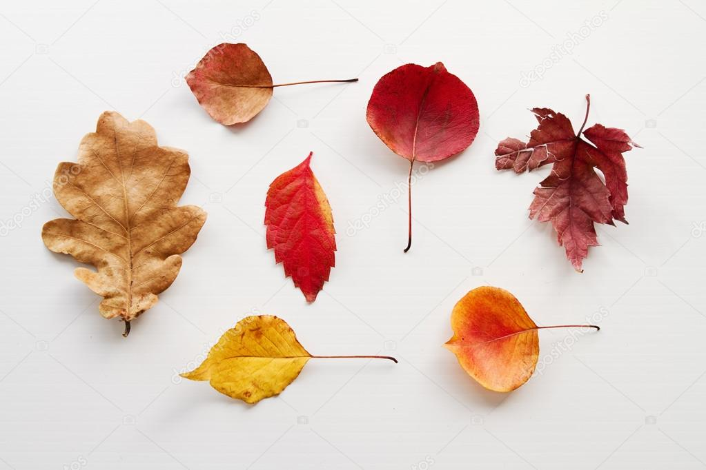 Overhead view of variety of autumn leaves on white background