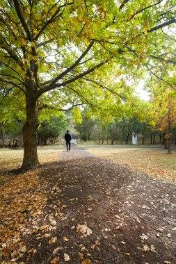 Man walking away in park