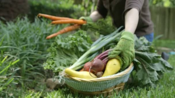 Dolly push gardner dávat zeleninu v košíku