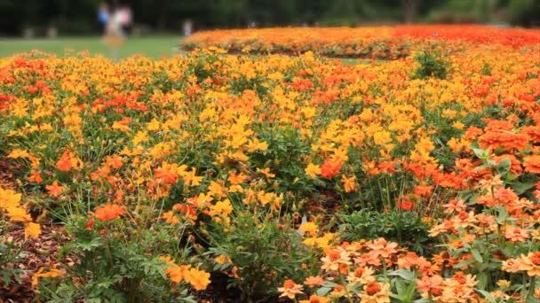 louka plná květin