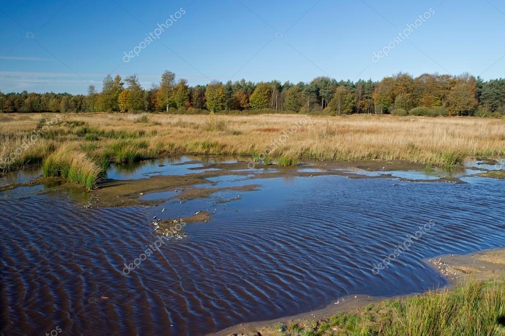 浅い湖とオランダ、ドレンテ州の...