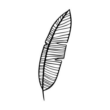 Banana leaf stylized vector illustration. Doodle illustration of decorative tropical foliage. Leaves of palm tree isolated on white background. icon