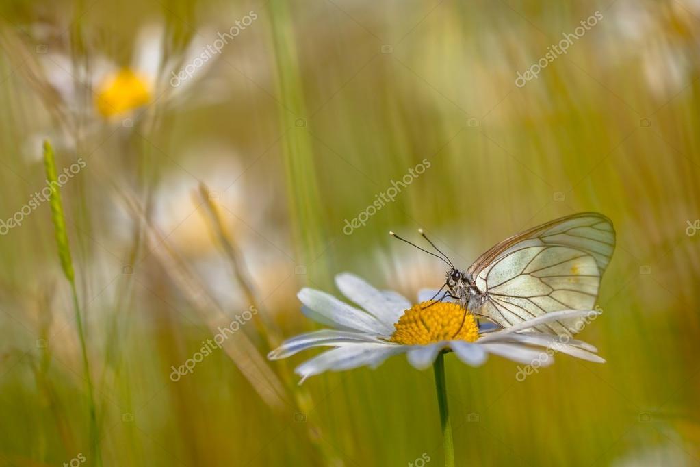 schwarze Adern weiß auf Rasen — Stockfoto © CreativeNature #71151307
