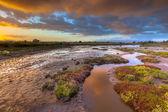 Salicornia ústí sunrise