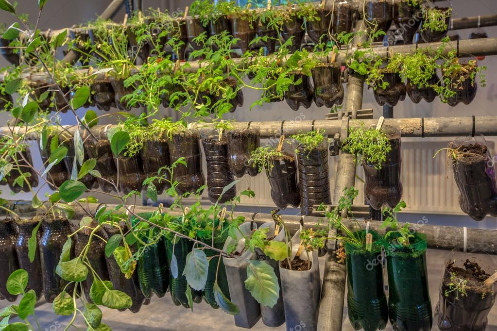 Wonderful Hanging Baskets Vegetable Garden Made Of Plastic Bottles Inside A Home U2014  Photo By CreativeNature