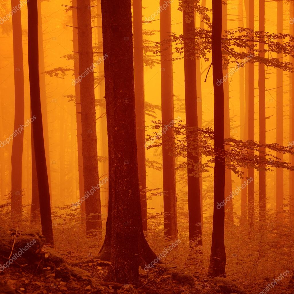 Red over saturated foggy woodland