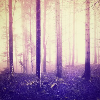 Magic bright purple light in foggy woodland with bright trees and dark forest floor. Color and vintage filter effect used. stock vector