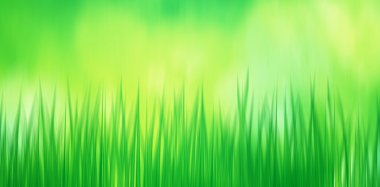 Abstract blurred green grass illustration