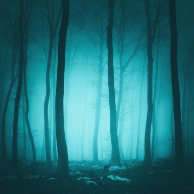 Fantasy turquoise color forest