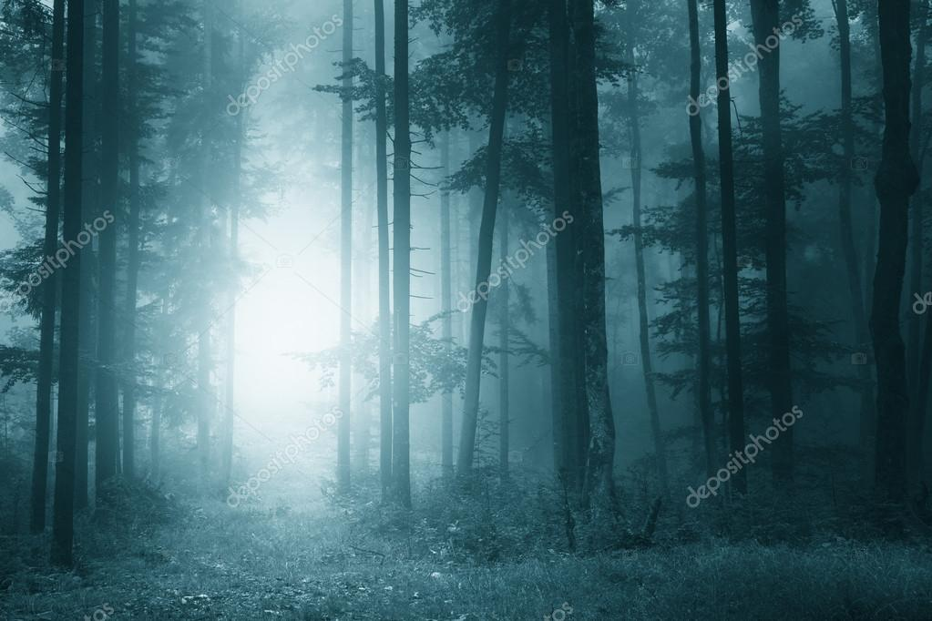 Mystic turquoise blue forest