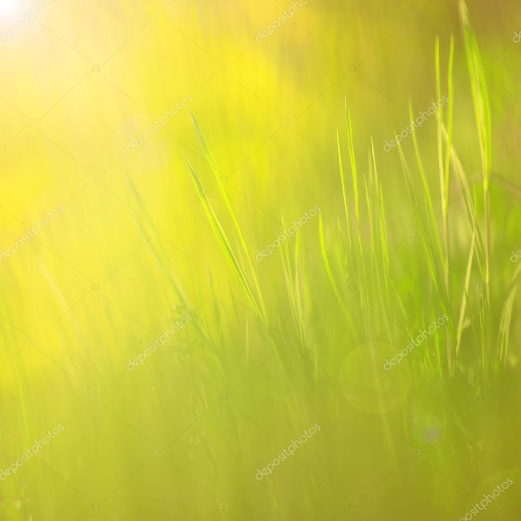 Abstract yellow green color grass
