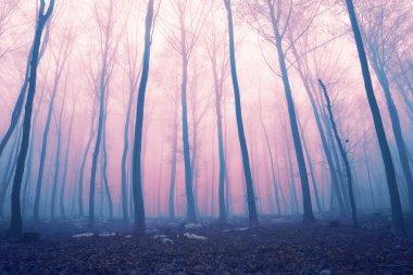 Fantasy color foggy fairytale forest