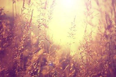 Blurred vintage color meadow