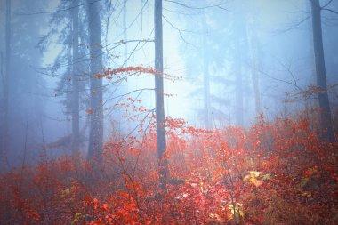 Magical colorful autumn forest landscape