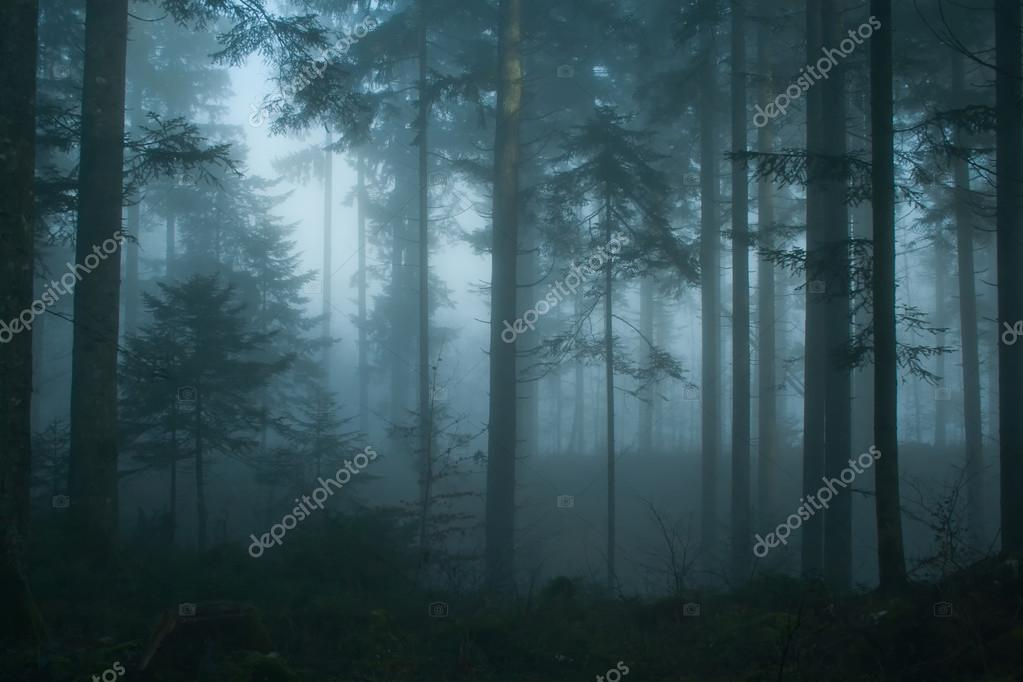 Magic morning spruce forest