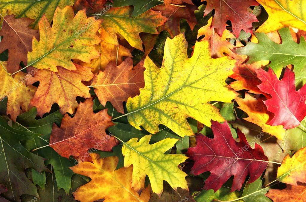 Las hojas de oto o colorido foto de stock robsonphoto - Descargar autumn leaves ...