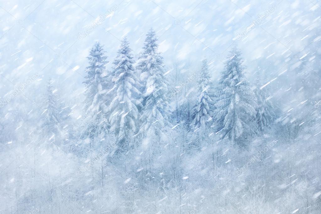Snowy winter forest scene