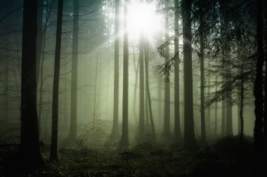 Foggy forest with sun light