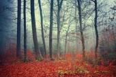 Színes álmodozó őszi erdő