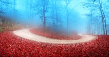 Foggy autumn forest road