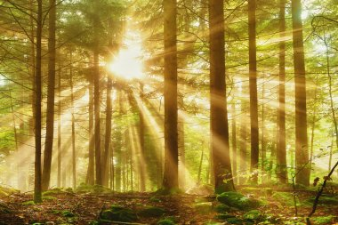 Dreamy forest light