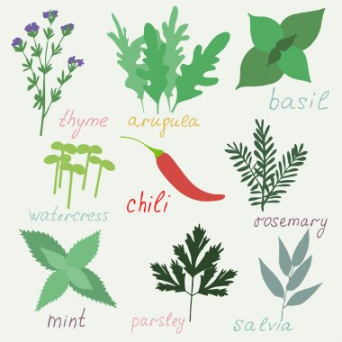 Set of hend drawn herbs spices isolated.