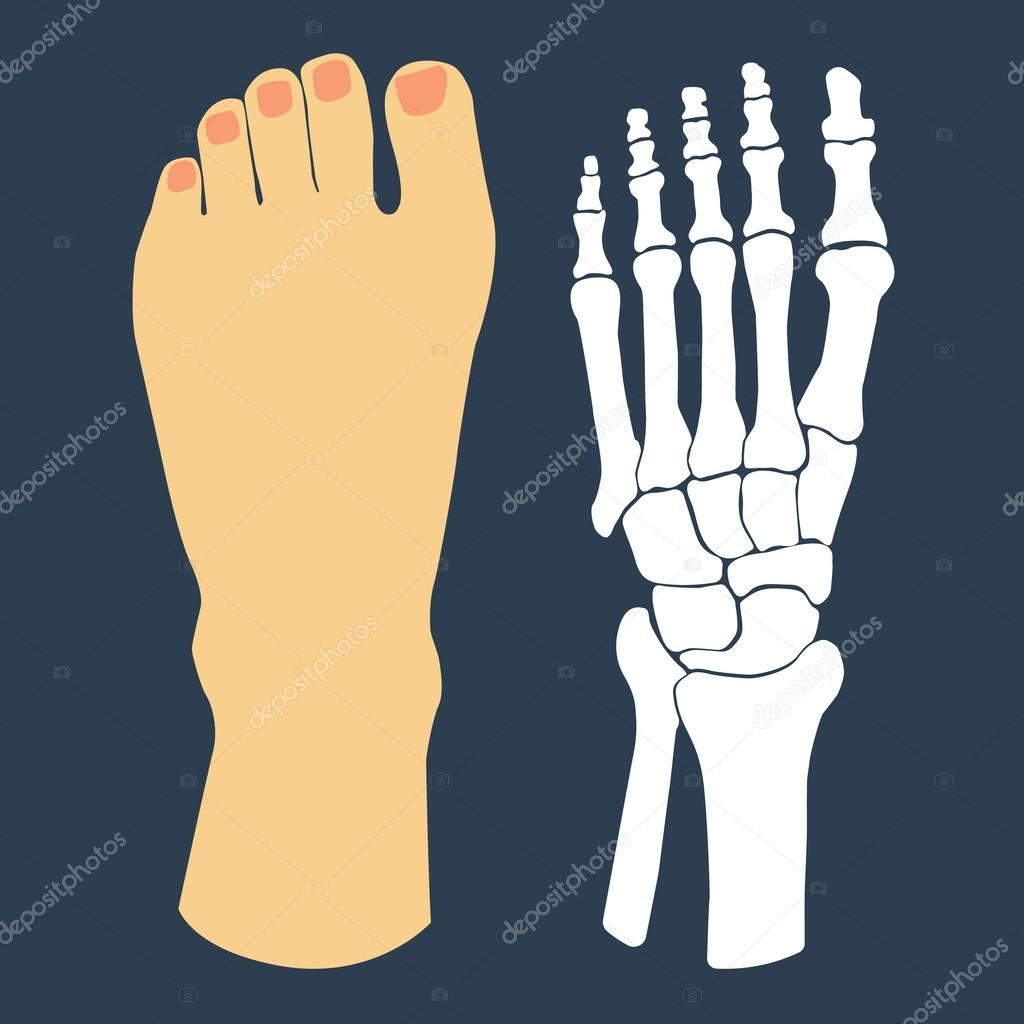 El diseño plano del pie y el esqueleto del pie. Ilustración de ...